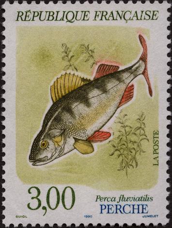 À la découverte du monde aquatique